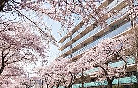 「さくら通り」輝く美しい華とともにつくられる光景。それは羨望の景であり、住まう人にとっては誇りとなります。特に春に桜が満開になる頃は、「さくら通り」と接する敷地南側の景観が圧巻です。