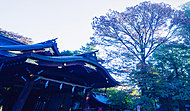 布多天神社 約280m(徒歩4分)
