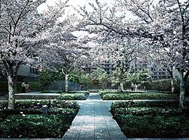 プライベートガーデンの奥に広がるのは、地域コミュニケーションの場となる「桜ガーデン」。