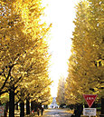 慶応義塾大学 日吉キャンパス 約1,870m(徒歩24分)