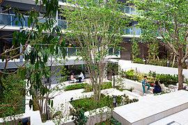 ケヤキのシンボルツリーを配したプライベートガーデンは、キッズルーム&ペアレンツサロンとライブラリーを緑の潤いでつなぐ中庭です。