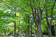 勝山公園 約220m(徒歩3分)