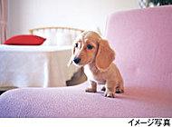 大切な家族の一員であるペットと一緒に暮らすことができます。※ペットの大きさ・種類・数等には制限があります。詳しくは係員におたずねください。
