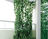 夏の日射しを和らげ蒸散効果により室内の温度上昇を軽減するグリーンカーテン用フック※グリーンカーテンは専用取り付けフックのみの設置となります。