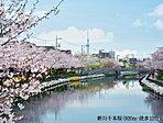 新川千本桜 約920m(徒歩12分)