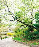 鵜の木松山公園 約110m(平成27年4月撮影)