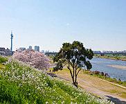 多摩川丸子橋緑地 約1,230m(徒歩16分)(平成27年3月撮影)