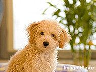一定のルールのもとペットと一緒に暮らしていただくことができます。※飼育できるペットの種類・大きさは規約により制限があります。