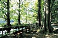 都立石神井公園 約1,210m(自転車5分)