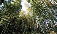 すずめのお宿緑地公園 約400m(徒歩5分/自転車2分)
