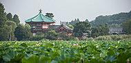 上野恩賜公園 約60m(徒歩1分)