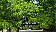 都市緑化植物園 約430m(徒歩6分)