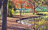 加藤山将軍池 約210m(徒歩3分)