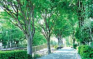 妙正寺川 約800m(徒歩10分)
