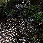 井の頭恩賜公園前 約1,140m(徒歩15分)
