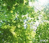 街区の緑を増やし、ヒートアイランドも抑制する屋上緑化。