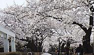 青山霊園 約80m