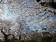上野恩賜公園 約1,160m(徒歩15分)
