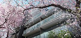 敷地東側は、桜並木が美しい緑道となっています。春になれば、アーチをかけるように桜が美しく咲き誇り、あたりは華やかな雰囲気に包まれます。