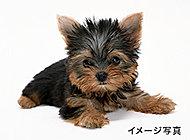 ※ペットの種類、大きさ及び頭数には制限がございます。詳細は管理規約集をご確認ください。