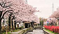曳舟川親水公園 約220m(徒歩3分)