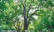 都立林試の森公園 約990m(徒歩13分)