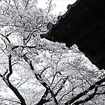 善福寺 約350m(徒歩5分)