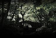 有栖川宮記念公園 約530m(徒歩7分)(平成27年11月撮影)