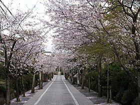桜並木も近くにあります