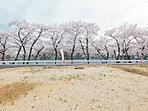 ゆったり広いLDK。ふんだんな陽光と桜並木の風景が楽しめます。(2号棟)