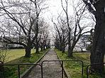 部屋の中からお花見ができる棟あります。またリビングから富士山の見える棟もあります。是非現地でご確認ください。