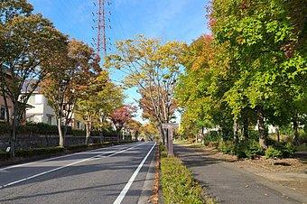 区画の整った閑静な街並み。緑に囲まれたやすらぎの住環境