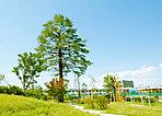 高さ約20mの既存樹ヒマラヤ杉を公園の中心に配した「セントラルパーク」
