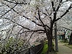 春には桜が美しい「今川緑道」まで約180mです。日頃のお散歩コースとしてもご利用いただけます。