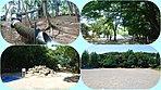 田喜野井公園2分(220m) 18017m2の広大な敷地にお子様が喜ぶアスレチック&長ーいチューブスライダー。散歩コースとして楽しめます。。