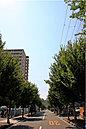 現地前面道路は、きれいな並木道で、四季の移ろいが感じられます。※現地周辺(平成28年6月撮影)