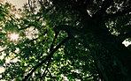 西福寺(平成28年6月撮影/静景の邸から約140m・光彩の邸から約80m)