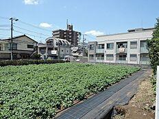 生産緑地が隣ですので、住環境良好です。