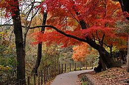 「都立石神井公園」 880m