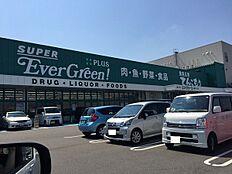 エバグリーン