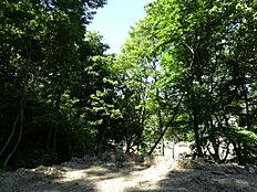 土地から山林を見て