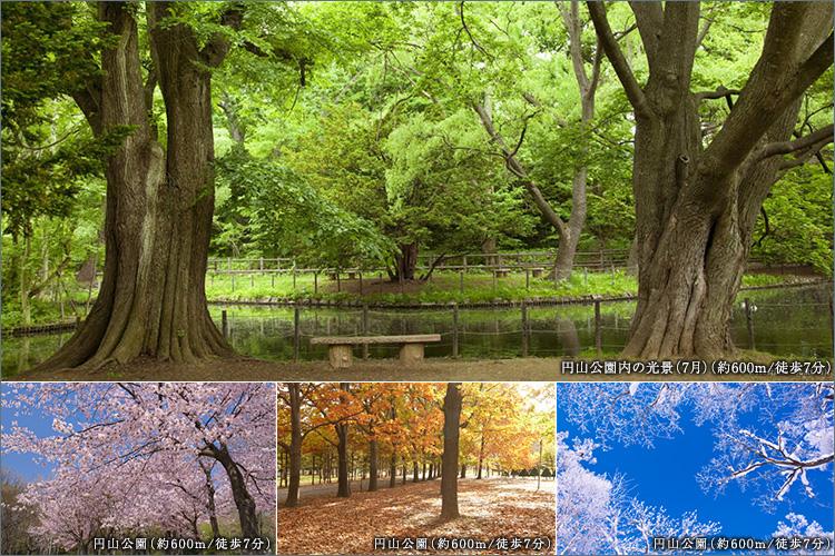 ■日常に寄り添う、円山公園の四季の彩り。