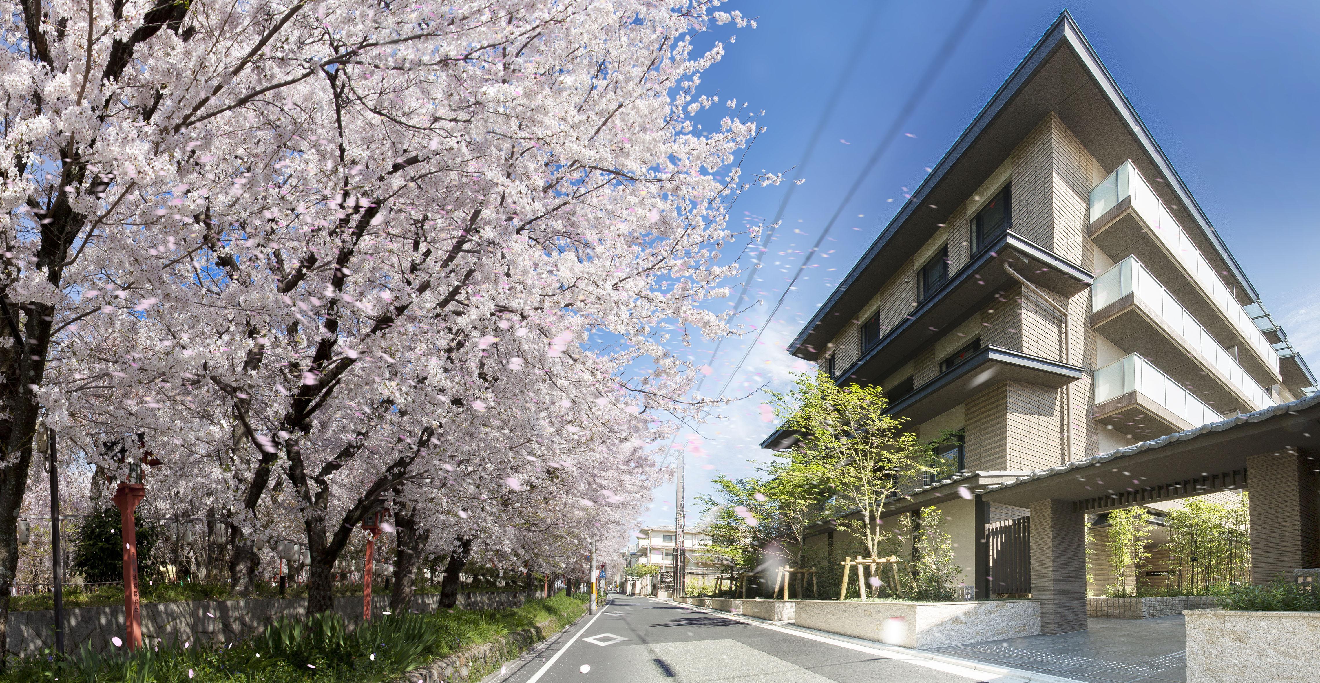 ホワイト 京都 ピュア