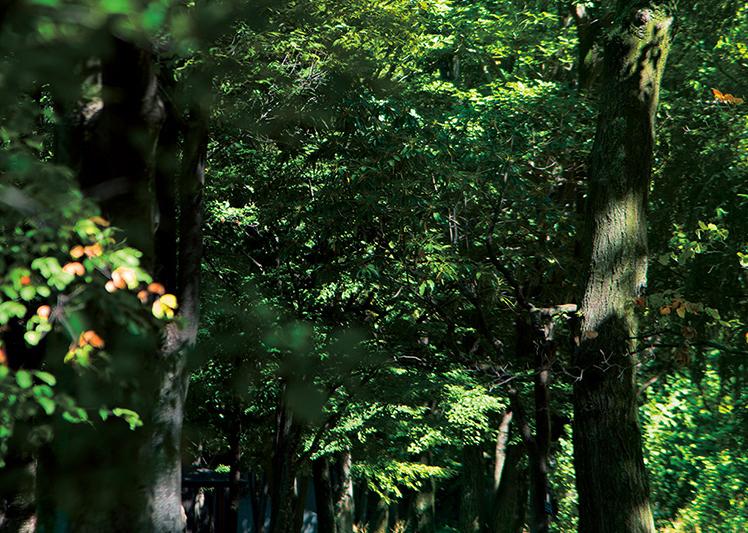 武蔵野中央公園 約690m(徒歩9分)