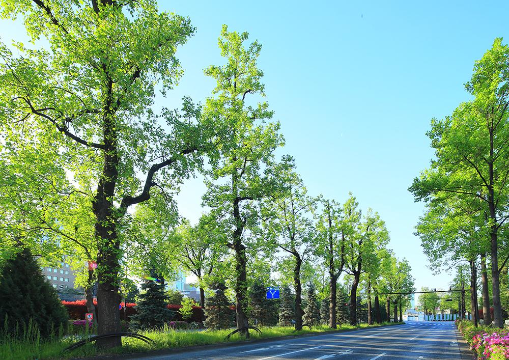 外堀通りの並木道 約160m(徒歩2分)(2019年5月撮影)