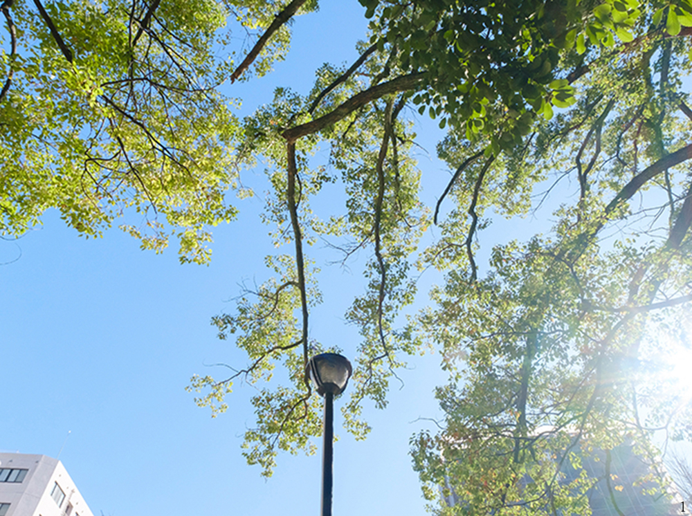 瓊の浦公園 約50m(徒歩1分)
