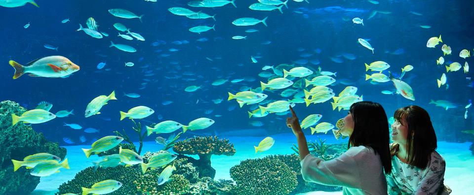 サンシャイン水族館 約410m(徒歩6分)