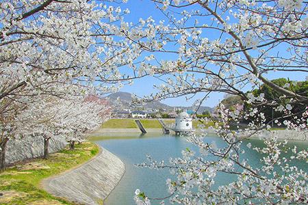 桜花のニテコ池 約210m(徒歩3分)(平成22年3月撮影)