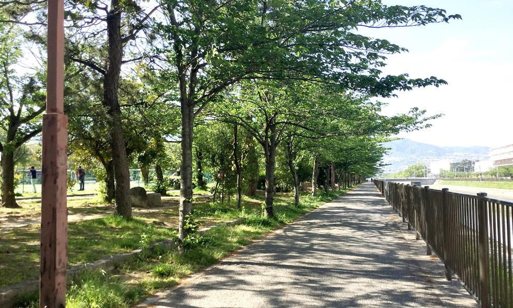 芦屋中央公園 約420m(徒歩6分)