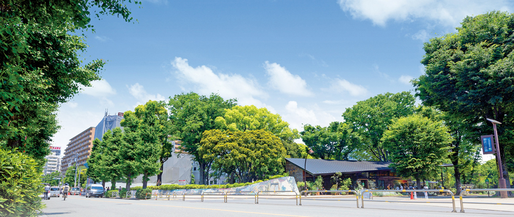 駒沢公園通り 約540m(徒歩7分)